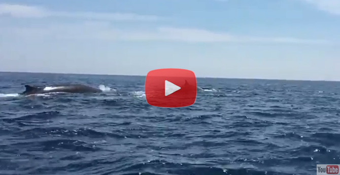 Dolphins & Whales Off Cape May